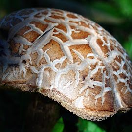 by Christine Warner - Nature Up Close Mushrooms & Fungi ( mushroom, novice, nature, novices only, nature up close )