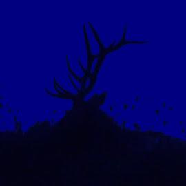 Elk Silhouette  by Douglas Clifford - Digital Art Animals