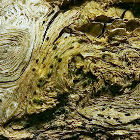 PWC92: 100 percent wood by Jeannie Love - Nature Up Close Other Natural Objects ( wood, color, texture, drift wood, design, pwc )