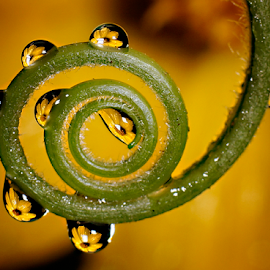 by Elang Wahyudi - Nature Up Close Natural Waterdrops