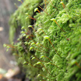 Moss by Ivan Ristić - Novices Only Macro ( tree, nature, autumn, moss, nature up close, forest )