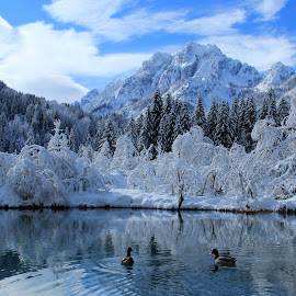 Zelenci In White  by Miro Zalokar - Landscapes Mountains & Hills