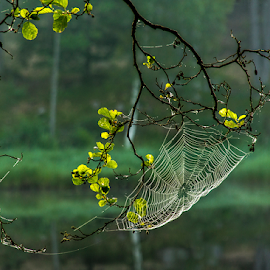 The web by Peter Samuelsson - Nature Up Close Other Natural Objects