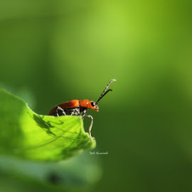 upon the alert by Dedi Kurniadi - Animals Insects & Spiders