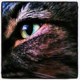 Missy's Eye #mycat by Hayley Gault - Instagram & Mobile Android