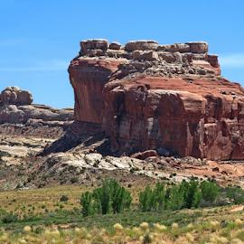 Desert Mesa by Tony Huffaker - Landscapes Deserts ( desert, mesa, trees, sandstone, sage brush )