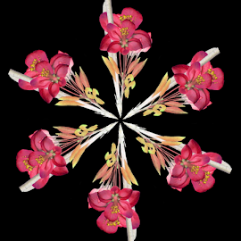 PPBK 1 by Tina Dare - Digital Art Abstract ( black background, abstract, kaleidoscope, patterns, pinks, manipulated, designs, distorted, flowers, shapes )