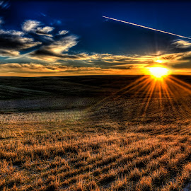 by Jennifer Gilfillan - Landscapes Prairies, Meadows & Fields ( wheat, harvested, sunset, harvest, wheat fields, fields, harvests )