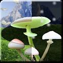Magic Mushrooms LWP HD icon