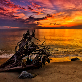 The Wrecked Tree by Charliemagne Unggay - Landscapes Waterscapes ( clouds, water, nature, colors, sunrise )