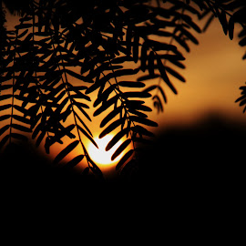 Holding onto sunlight by Deb Bulger - Nature Up Close Leaves & Grasses ( up close, orange, nature, sunset, leaves, sun,  )