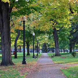 by Elena Stanescu-Bellu - City,  Street & Park  City Parks ( benches, park, fall, trees, lamp posts, alley,  )