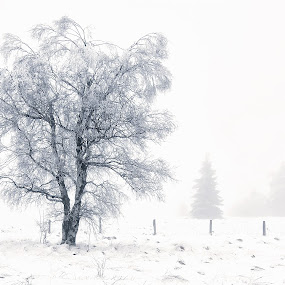 Shadows In The Fog by Dominic Schroeyers - Landscapes Prairies, Meadows & Fields ( winter, tree, cold, fog, ice, snow, white, freezing, frozen )
