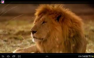 Screenshot of Belgesel TV izle