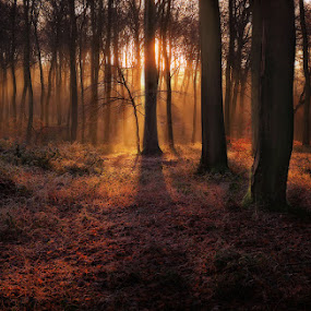 Sunrise in Winter Woods by Ceri Jones - Landscapes Forests ( winter, season, ice, frost, trees, woodland, woods )