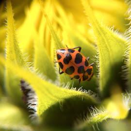 Exploring a Sunflower by Bridget Wegrzyn - Nature Up Close Other Natural Objects (  )
