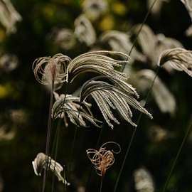 Grass flower - Itapura SP by Marcello Toldi - Nature Up Close Leaves & Grasses
