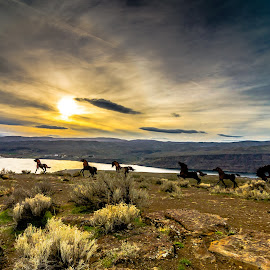 Wild Horses Monument by Bob Juarez - Buildings & Architecture Statues & Monuments ( clouds, mountains, statues, sage brush, sun, river )