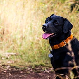 Loyalty by Neel Gengje - Animals - Dogs Portraits ( dogs, companion, loyalty, dog, friend )