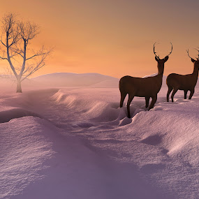 snowy sunrise (3D ILLUSTRATED) by Jamie Keith - Illustration Places