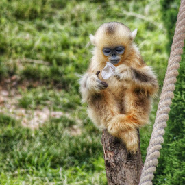 cute monkey by Agus Suhendra Suhendra - Novices Only Wildlife