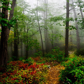 Deeper into the Mist by Sergio Smiriglio - Landscapes Forests ( hudson valley, sergio smiriglio, storm king park, forest, cornwall, mist, sony a7 )