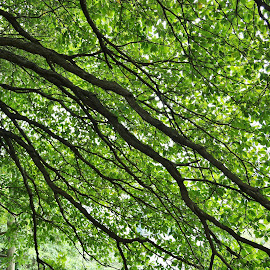 Tree Branches by Koh Chip Whye - Nature Up Close Trees & Bushes (  )