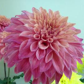 by Brenda Shafer-Pellinen - Novices Only Flowers & Plants
