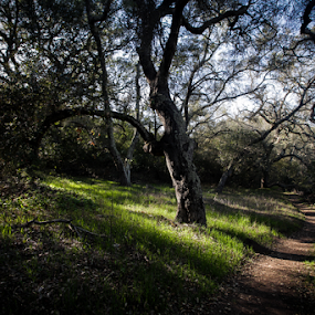 shaded path by Eric Ebling - Landscapes Forests ( mountains, adventure, nature, green, outdoors, trees, shade, light, hiking )