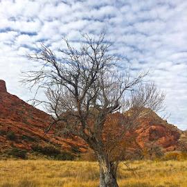by Greg Loewen - Landscapes Deserts