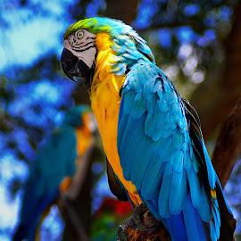 by Jeff Fox - Animals Birds