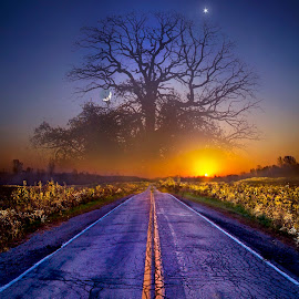 What Dreams May Come by Phil Koch - Digital Art Places ( vertical, photograph, fine art, yellow, travel, leaves, love, sky, tree, nature, autumn, light, flower, orange, twilight, agriculture, horizon, portrait, environment, dawn, serene, outdoors, trees, floral, natural light, wisconsin, ray, road, landscape, phil koch, sun, photography, blue sky, path, horizons, office, clouds, park, fantacy, green, back light, scenic, morning, shadows, wild flowers, field, red, color, blue, sunset, peace, fall, meadow, landscapephotography, beam, earth, sunrise, landscapes, hike, mist )