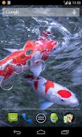 Screenshot of Koi fish Live Wallpaper