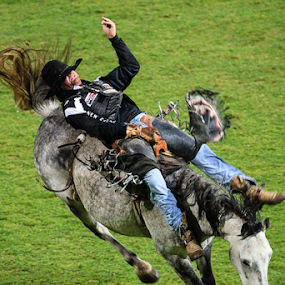 They call this fun by Glenys Lilley - Sports & Fitness Rodeo/Bull Riding ( bucking horse, cowboys, horse, rodeo, saddle bronc,  )