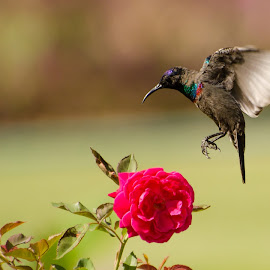 by Ani Das - Animals Birds ( nature, wildlife, flower )