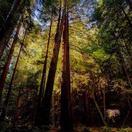 When Time Stood Still by Madhujith Venkatakrishna - Nature Up Close Trees & Bushes
