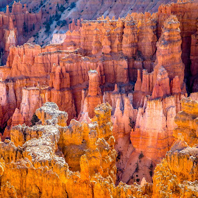 Above Wall Street by David Long - Landscapes Caves & Formations ( hoodoos, wall street, bryce canyon )