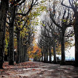 Árvores nuas by Ana Batista Constantino - City,  Street & Park  City Parks ( outono, natureza, lugares, parques, folhas )