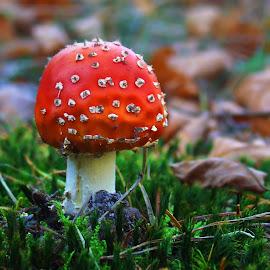 by Ad Spruijt - Nature Up Close Mushrooms & Fungi