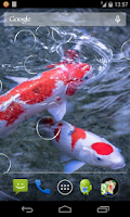 Screenshot of Koi fish Live Wallpaper