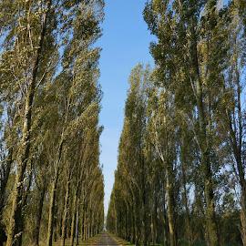 We will meet by Sampath Mukherjee - Landscapes Forests