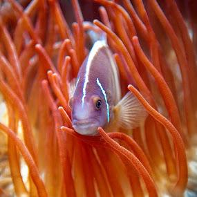 by Joe McBroom - Animals Fish