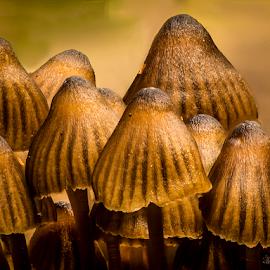 Fungi cones by Peter Samuelsson - Nature Up Close Mushrooms & Fungi