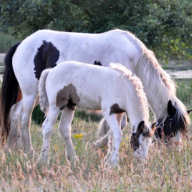 Horses by Carl Purslow - Novices Only Wildlife