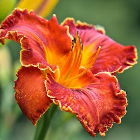 by Ann Bjerring Ravn Weis - Flowers Flower Gardens