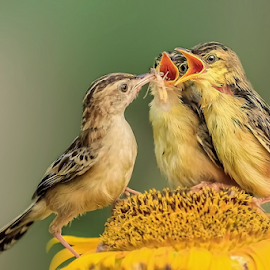 Don't  fights over food... by MazLoy Husada - Animals Birds