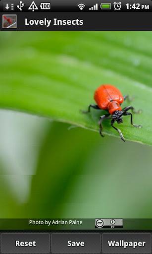 【免費媒體與影片App】Lovely Insects-APP點子