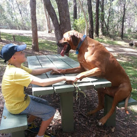 My two boys having a chat during a picnic by Phil Qld - Animals - Dogs Playing