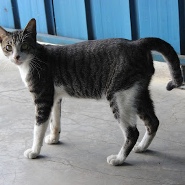 A surprised stray kitten by Dura Zaman - Animals - Cats Kittens ( cat, kitten, malaysia, road, stray )