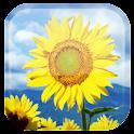 Sunflower fond d'écran animé icon